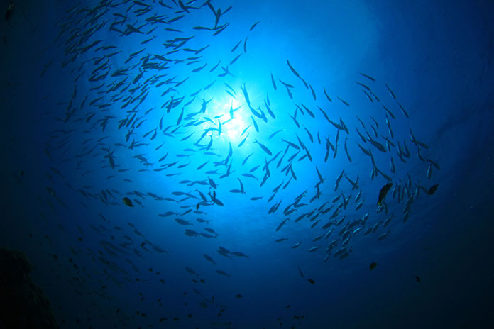 How Can A Fish Move Around In The Dark?